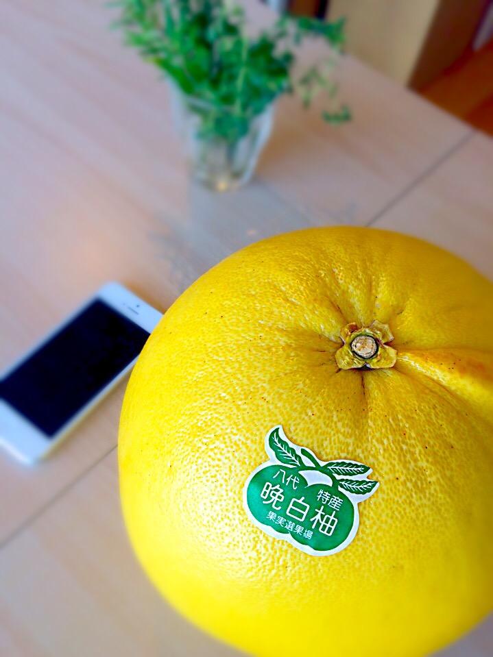 晩白柚(バンペイユ)、巨大みかんを食べ尽くそう!